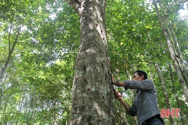 Thăm xứ sở trầm hương nổi tiếng nhất Hà Tĩnh