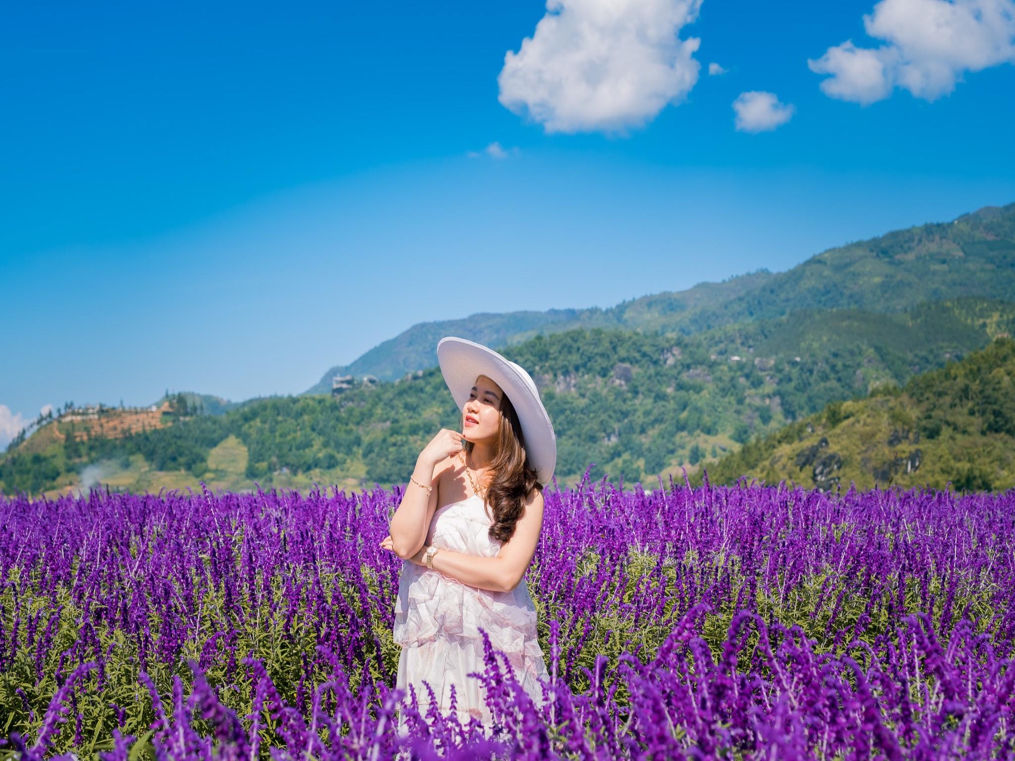 Mê mẩn trước vườn hoa Lavender ở Sa Pa