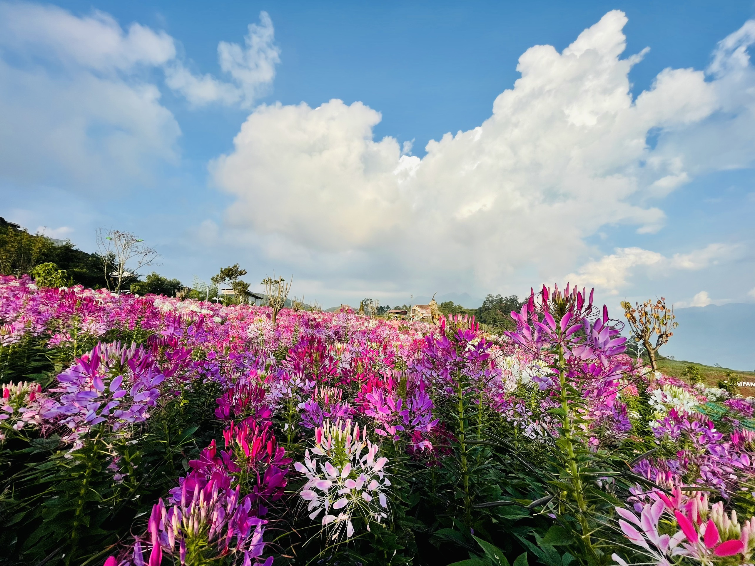 Lung linh sắc hoa ở Khu du lịch Sunworld Fansipan Legend Sa Pa