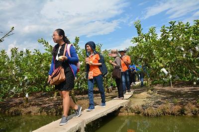 Guava Garden