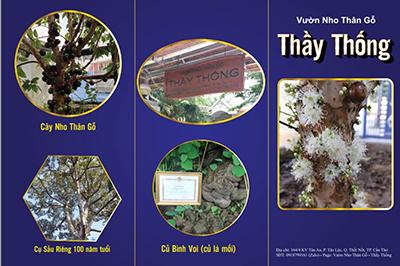 Vineyard - Thong  teacher